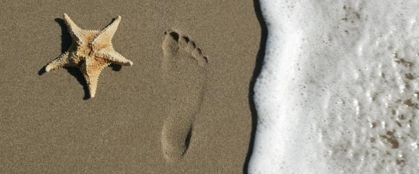 Florida Gulf Coast Vacation Rental Trends