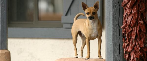 Santa Fe Named Pet-Friendly Vacation Destination by FlipKey