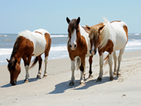 Chincoteague Islands, VA