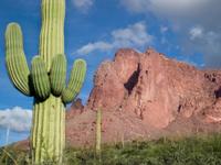 Saguaro - Tucson, AZ