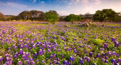 Фредериксбург, Техас